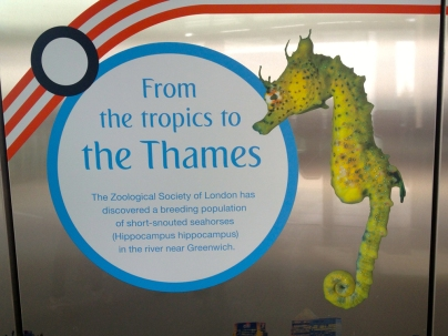 Seahorses in the Thames?