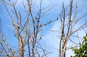 Birds in the tree.