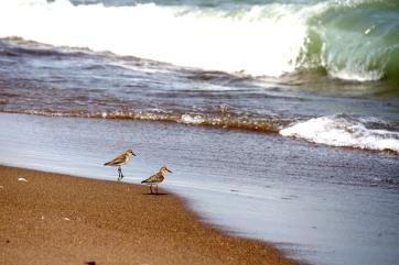 Birds on the shore.