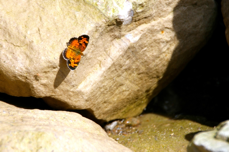 A lone monarch butterfly waiting for its mates.