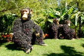 Canada, One Small Bridge for Mankind, One Giant Leap for Biodiversity. It's chimps!
