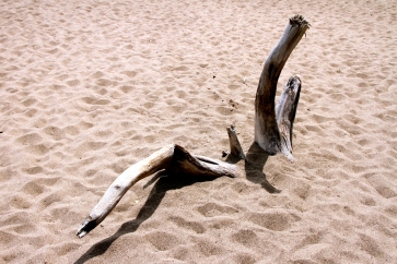 More driftwood.