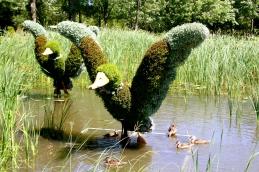 Ducks with ducks.