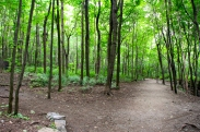 Traipsed through the forest at Mont Royal.