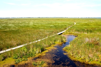Marsh at Point Pelee.