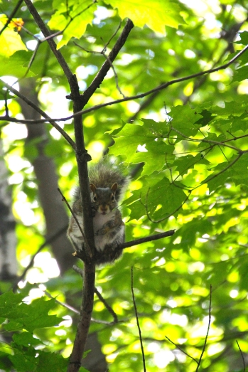 """This little guy watched us for a while. Probably the only one we've actually seen """"in the wild"""" so far."""