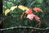 First hint of autumn colour