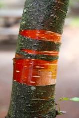 Red skin beneath brown bark. It felt like a fruit roll-up.