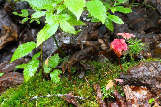 There were quite a few places that had miniatures leaves and moss and mushrooms. Perfect for fairies.