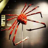 Adult giant Japanese spider crabs have a leg span of 3.7 metres and may live up to 100 years...if people didn't attempt to kill them out of sheer terror.