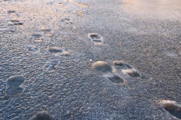 More frozen footsteps