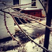 Ice branch
