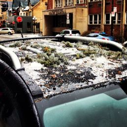This car had bits of branch stuck to its roof with ice. It looked like someone had deliberately done it, or that it was growing out of the car roof.