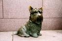 FDR's dog
