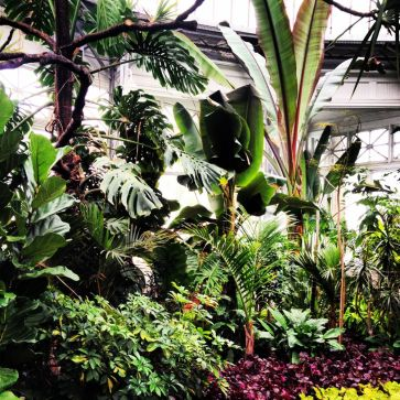 Giant palms!