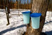 Sugar water buckets