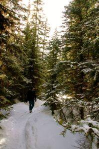 Lost in Narnia
