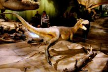 One of the dinosaurs that greets you as you enter. Kids were scared.