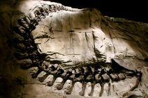 T-Rex tail