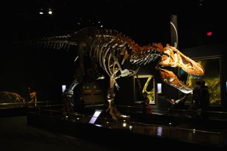 Another T-Rex