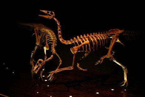 Bird-mimic dinosaurs