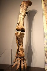 Dinosaur leg. Very tall. Taller than me.