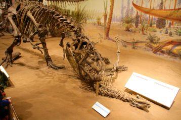 Dinosaur death match