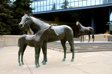 Horses in front of the municipal building