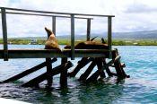 Sun-baking sea lions
