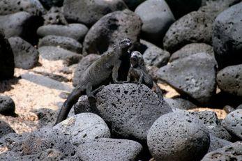 Iguana conference