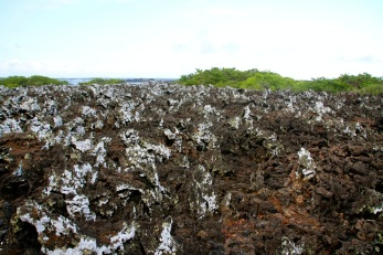 The lichen only grows on one side of the rock due to the winds