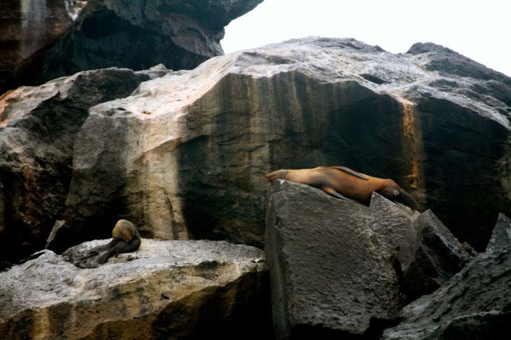 Seal and fur seal - together at last