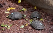 Baby tortoises. Only a few months old