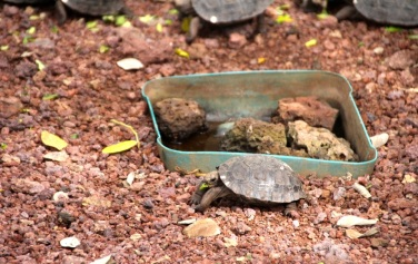 Really young tortoises