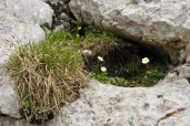 Loved the way these flowers were tucked into a nook in-between these rocks