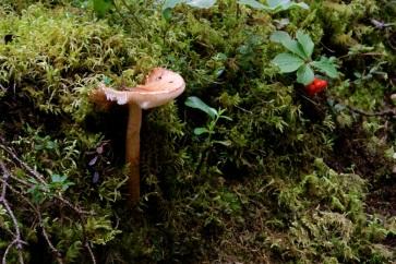 Great fungi