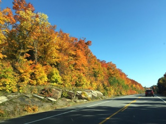 We weren't even near Algonquin Park before we were treated to a magnificent autumnal display.