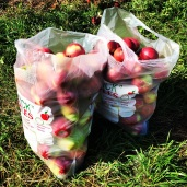 One bag of apples is ours, the other is Bec's