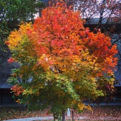 Autumn in UofT