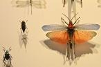 Flying bugs