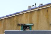 Sleeping Cat in a Ceramic Roof