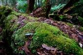 More moss