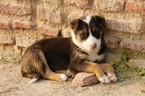 A stray puppy I would have liked to take home
