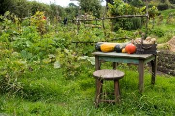 Working veggie garden