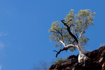 Tree overhanging Circular Pool