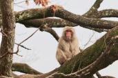 Le singe est sur le branche