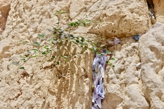 Notes to a Wailing Wall